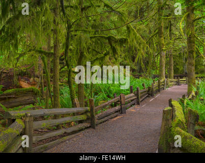 Vancouver Island, British Columbia, Canada: Cathedral Grove trail through old Growth forest, MacMillan Provincial - Stock Photo