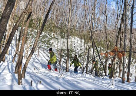 Hunchun, China's Jilin Province. 3rd Feb, 2016. Rangers patrol in the forest of the Hunchun National Siberian Tiger - Stock Photo