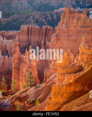 Bryce Canyon National Park, UT: Morning sun in the Bryce Amphitheater backlighting the hoodoos and sandstone pinnacles - Stock Photo
