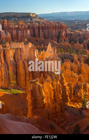 Bryce Canyon National Park, UT: Morning sun in the Bryce Ampitheater backlighting the hoodoos and sandstone pinnacles - Stock Photo