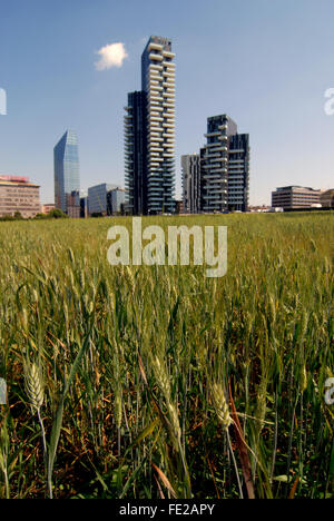 New skyscrapers in the area of Porta Nuova /Stazione Garibaldi , surrounded by a vast cornfield.  The project named - Stock Photo