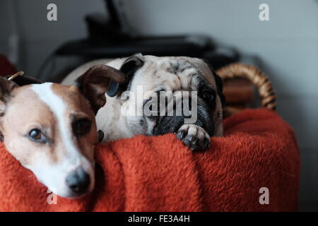Portrait Of Puppies In Basket At Home - Stock Photo