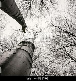 Low Angle View Of Bare Trees Against Clear Sky - Stock Photo