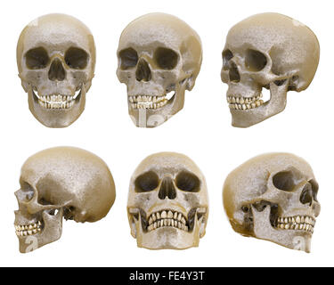 Human skull from different angles - Stock Photo