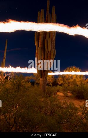Ring Of Fire Around Cactus Plant - Stock Photo