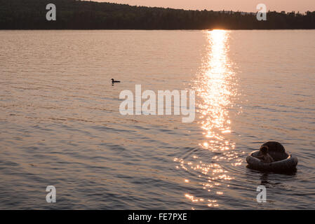 A 5 year old boy floating in a tube watches a loon swimming nearby as the setting sun reflects on a lake in northern - Stock Photo