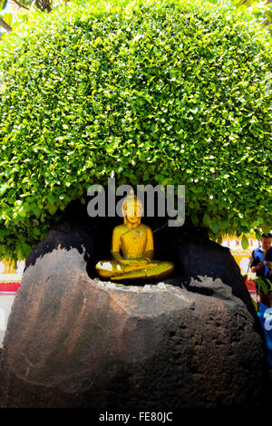 Buddha Statue Sitting Under Tree - Stock Photo