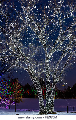 A Hudson Christmas Holiday Light Show At Hudson Gardens Littleton Stock Photo Royalty Free