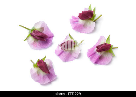 Sweet pea flowers isolated on white background stock photo 64587350 fresh sweet pea flowers on white background stock photo mightylinksfo Image collections