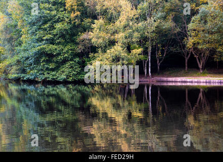 Mallards Pike Lake in the Forest of Dean, Gloucestershire, UK - Stock Photo