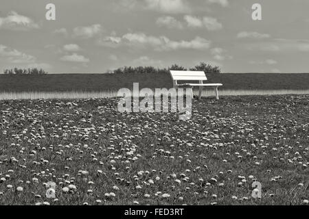 Black And White Shot Of A Bench In Field With Dandelions