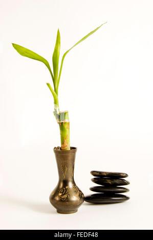 Lucky Bamboo In Vase Stock Photo 284323679 Alamy