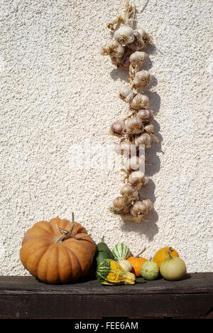 Assorted squashes and pumpkins on the table - Stock Photo