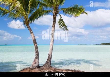 Palm trees at Blue Lagoon, Fakarava, Tuamotu Islands, French Polynesia