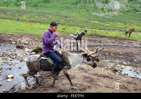 Duhkha (same as Tsaatan) man riding his reindeer - Stock Photo