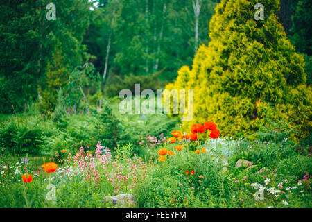 Flowerbed With Red Poppy Flowers, Small Green Trees And Cuted Bushes In Garden. Beautiful Summer Park. Landscaping. - Stock Photo