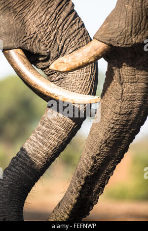 Details of an African Elephant - Stock Photo