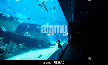 S.E.A. Aquarium in Singapore - Stock Photo