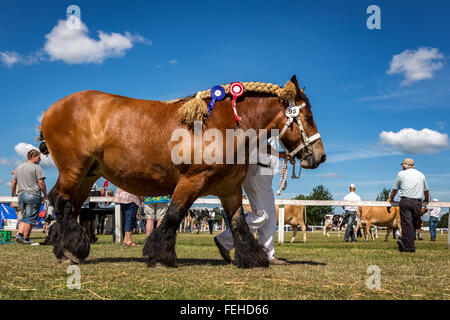 Showing of horses at Funen Agricultural show, Odense, Denmark - Stock Photo