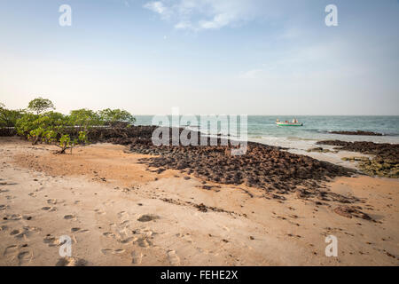 Mangroves growing on volcanic rock near the shore of the island Poilao in the Bijagos Islands of Guinea Bissau - Stock Photo