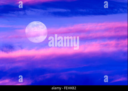 Moon clouds is a soft beautiful cloudscape over a blue sky with a silhouetted flock of birds flying by as a bright - Stock Photo