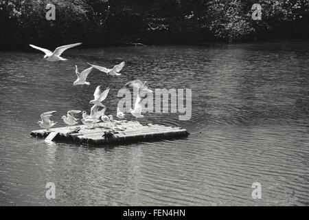 Seagulls On Raft In Lake - Stock Photo