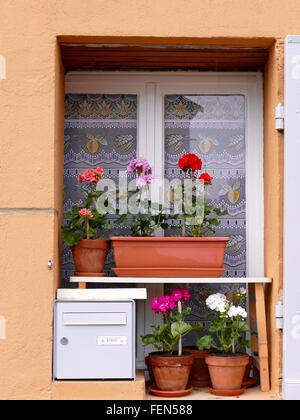 Flowers In Pots On Window Sill - Stock Photo