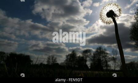 Low Angle View Of Dandelion Against Cloudy Sky - Stock Photo