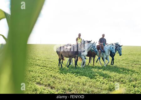 Woman and man riding and leading six horses in field - Stock Photo
