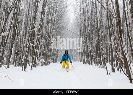 Sofia, Bulgaria - February 5, 2016: A skier is skiing among trees in a snowy forest in the mountain during winter. - Stock Photo