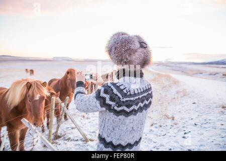 Woman taking photograph of ponies on snow-covered field, Iceland - Stock Photo