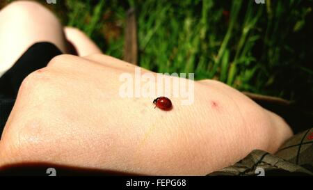 Close-Up Of A Bug On Human Hand - Stock Photo