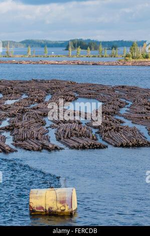 Logs Floating On Lake - Stock Photo