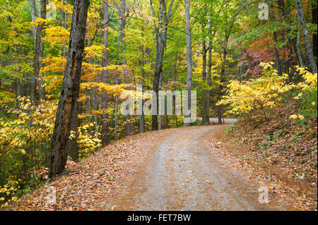 Fall foliage along Rich Mountain Road in Great Smoky Mountains National Park. - Stock Photo