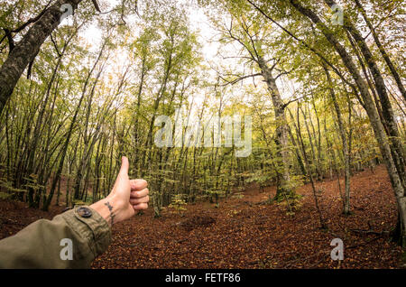 Man's Hand Showing Thump-Up Gesture In Front Of Lush Forest - Stock Photo