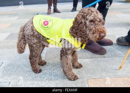 Frack Free Dog Coat in Blackpool, Lancashire, UK 9th February, 2016. Protesters against the Cuadrilla appeal to - Stock Photo