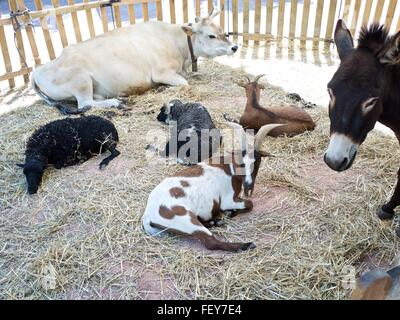 Farm Animals In Animal Pen - Stock Photo