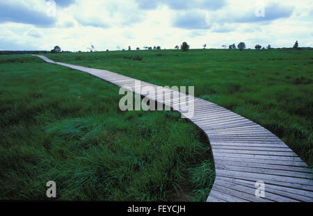 BEL, Belgium, high-moor Hohes Venn  BEL, Belgien, Hochmoor Hohes Venn - Stock Photo