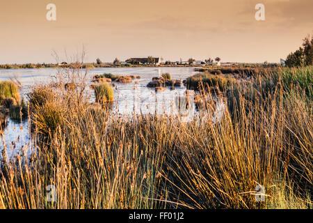 Landscape near Saint Maries de la Mer, Wetlands, Camargue, France - Stock Photo