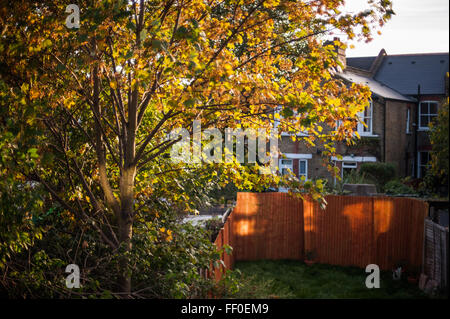 Autumn leaves in late afternoon in typical back garden, London, UK - Stock Photo