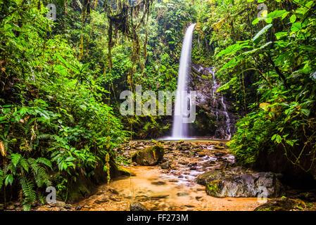 WaterfaRMRM San Vincente in an area of jungRMe caRMRMed Mashpi CRMoud Forest in the Choco Rainforest, Ecuador, South - Stock Photo