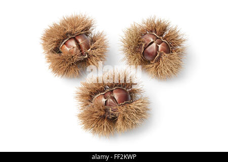 Sweet chestnuts in spiked pod on white background - Stock Photo