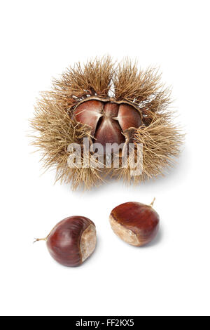 Sweet chestnut in spiked pod on white background - Stock Photo