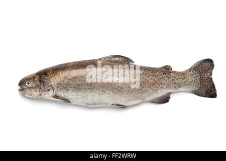 white salmon divorced singles personals Rsvp single - in2life on australia's no 1 dating & personals site rsvp free to search my specialty is bbq crispy skin salmon.