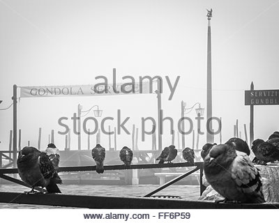 VENICE, ITALY -  11 JANUARY 2011:  Monochrome image of  pigeons perching on a metal fence during a wet, foggy morning - Stock Photo