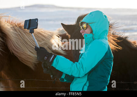 Woman taking selfie on selfie stick with Icelandic horses in snow in Iceland in January - Stock Photo