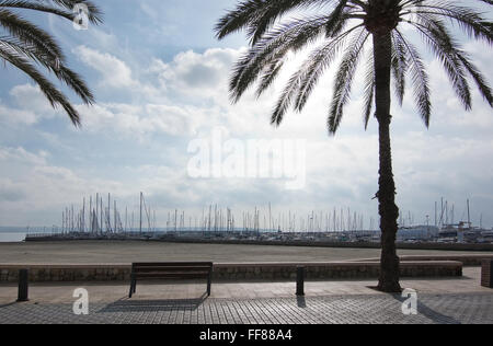 Peaceful seat under palm trees near sandy beach and marina on a sunny day on December 14, 2015 in Balearic islands, - Stock Photo