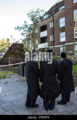 Men from the Jewish community look on at a large tree with it's roots ripped out of the ground, blown down on Stamford - Stock Photo