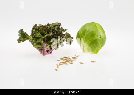 Flower Sprout and Brussels Sprout with Cumin Seeds - Stock Photo