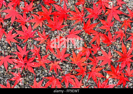 Autumn leaves on a gravel trail. - Stock Photo
